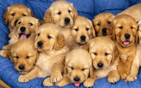 Image result for image cute puppies